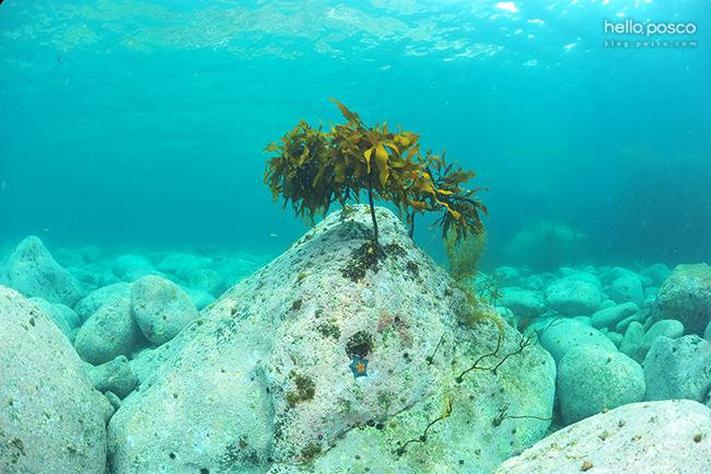 바다속의 모습
