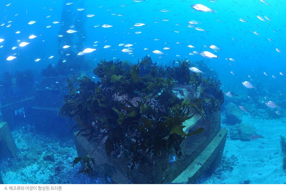 해조류와 어장이 형성된 트리톤의 모습